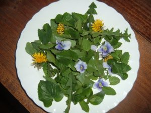 Salad of dandelion blosoms & greens, violets, wild oregano & lambs quarters