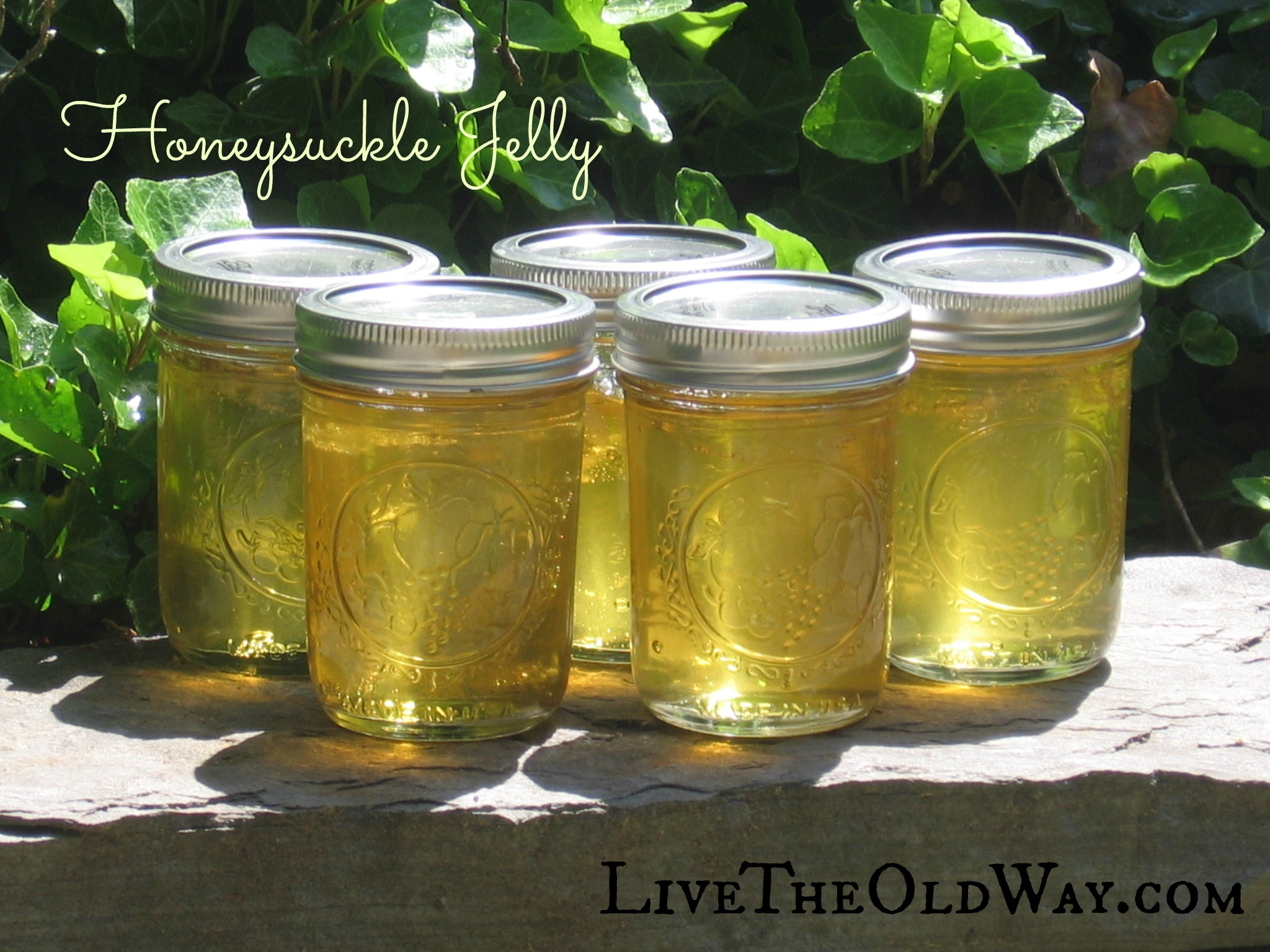 Honeysuckle Jelly – The Taste Of Childhood Summers
