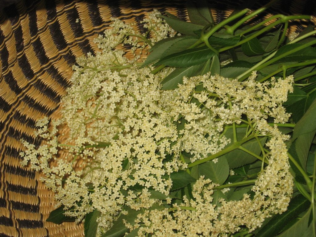 Elderflowers in basket