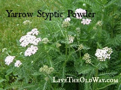First Aid – Yarrow Styptic Powder