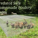 Predator Safe Homemade Poultry Cages
