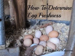 How Can You Tell If An Egg Is Fresh?