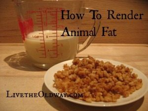 Rendering Animal Fat